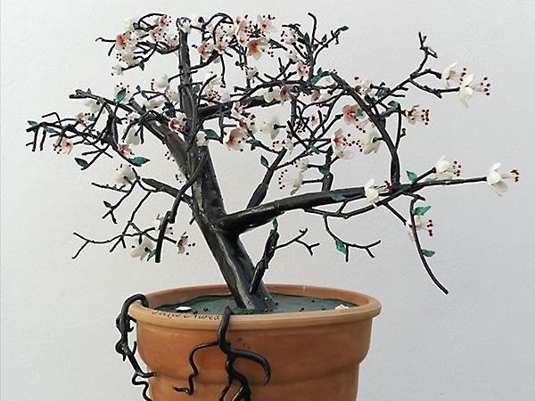 Дерево Сакуры, тень которого складывается в образ прекрасной девушки.