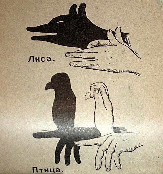 Театр теней: лиса и птица