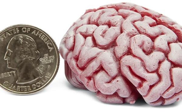 Мяч, в виде мозга для снятия стресса