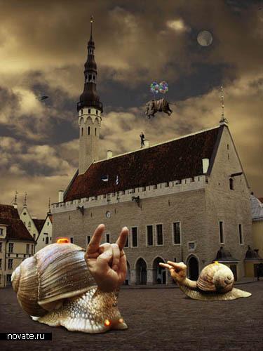 Таллинские чудеса