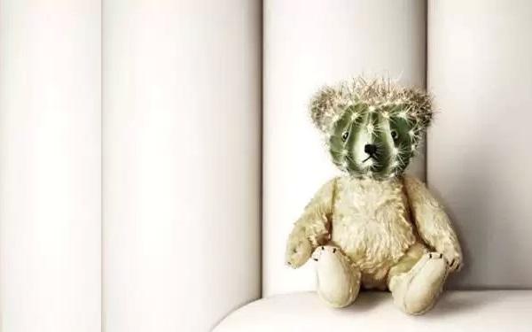 Мишка Teddy Bear Cactus