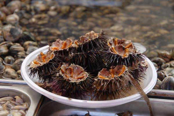Ricci di Mare - блюдо из живых морских ежей