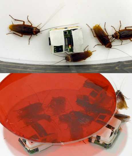 Robo-Roaches - роботы-'тараканы' для защиты от настоящих насекомых