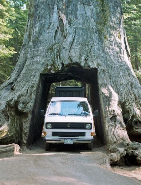 Необычный тоннель-дерево в Sequoia National Park