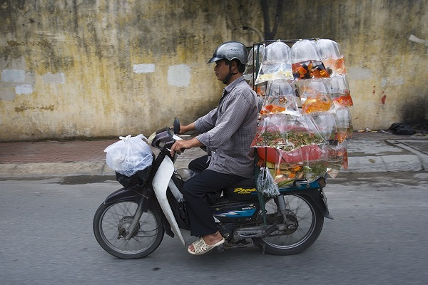Мотоциклы Вьетнама в качестве грузового такси.