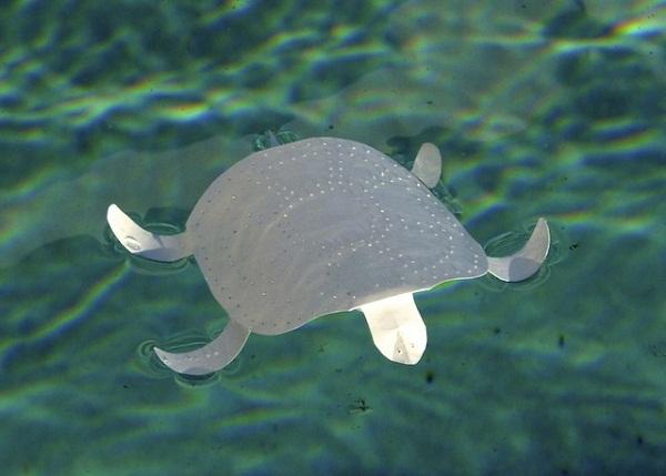 Черепаха из бумаги.