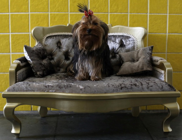 СПА-центр в Бразилии для собак.