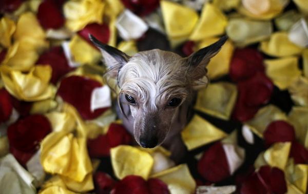 СПА-центр для собак в Бразилии.