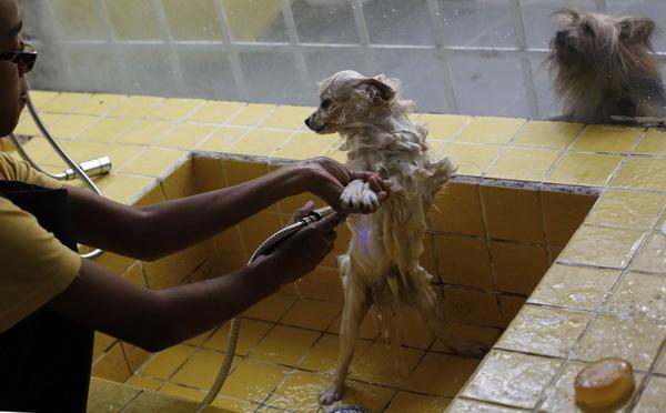 СПА-центр для домашних животных.