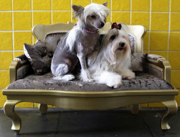 Современный СПА-центр для собак в Бразилии.