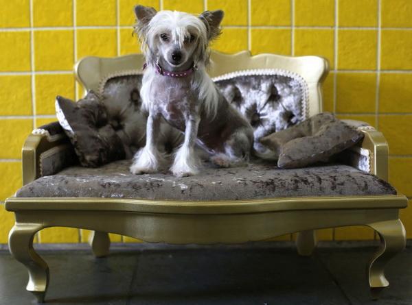 Салон красоты для собак.