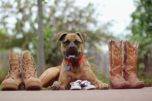 собака стережет обувь