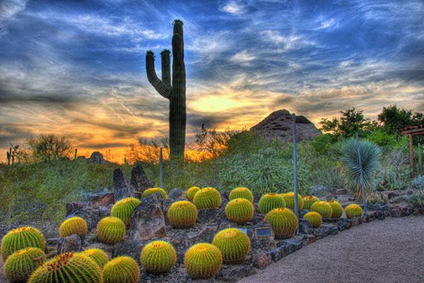 Ботанический сад пустыни, Финикс, Аризона