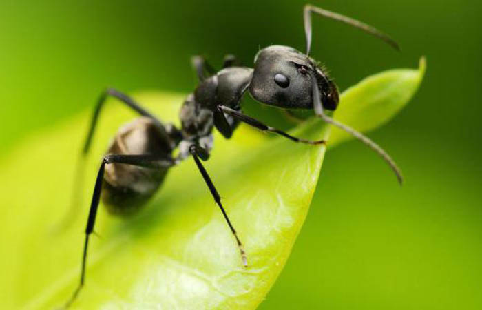 Средство против насекомых