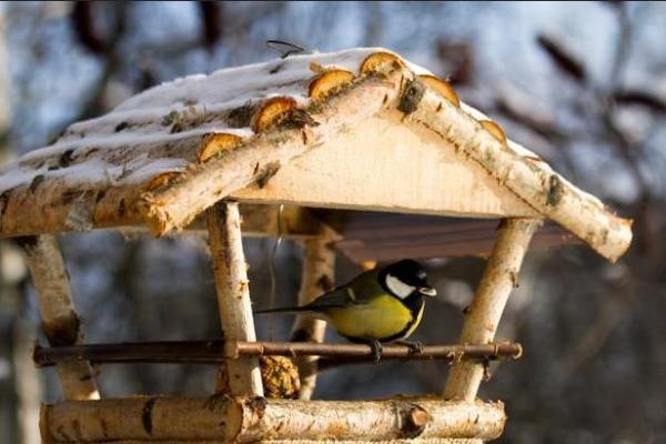 Кормушка для птиц, любящих раздолье