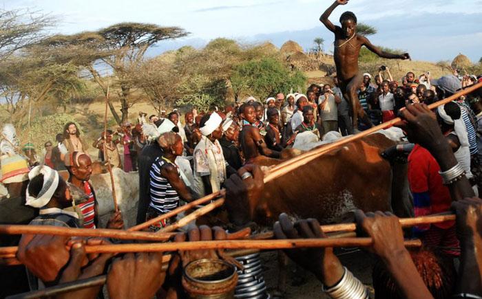 Соревнование по прыжкам через быков племени хамар