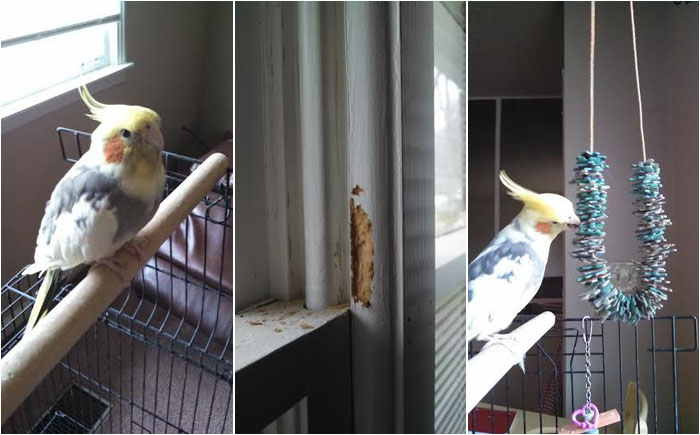 Игрушка для попугая своими руками