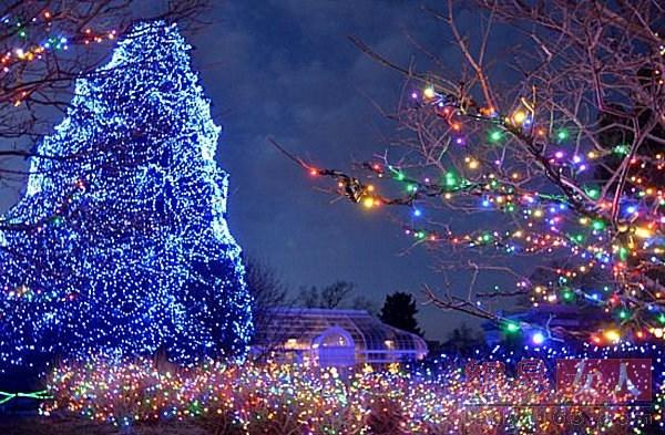 Рождественская ель в центре зоопарка Толедо (Огайо)