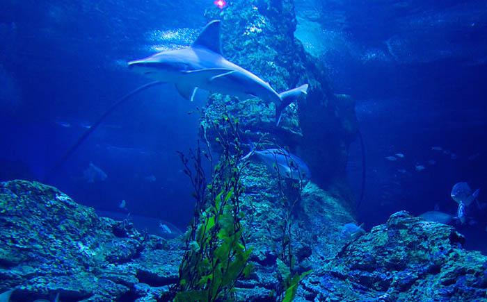 Аквариум Западной Австралии, Перт