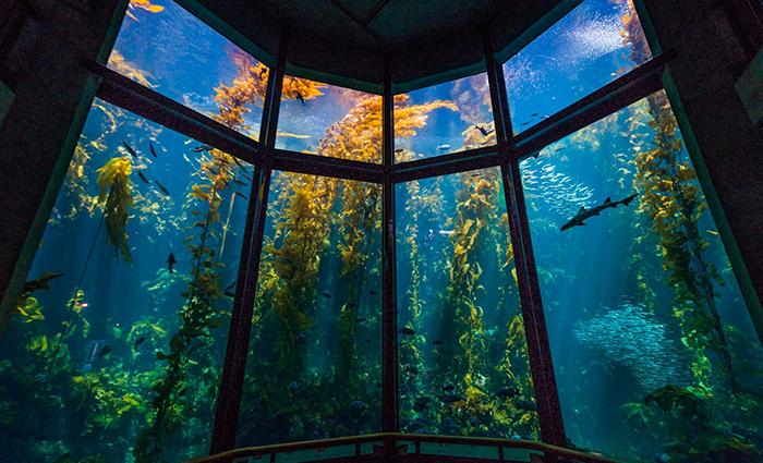 Аквариум Monterey Bay, Калифорния