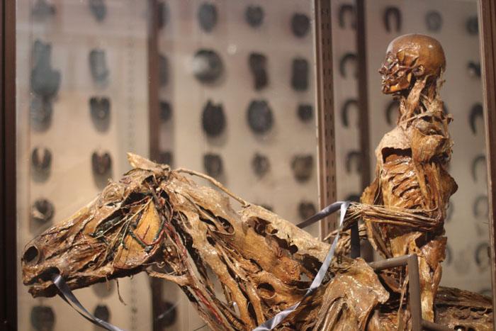 Оноре Фрагонар – забальзамированные тела