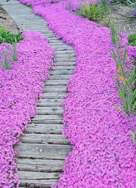 Цветы вдоль тропинки 83