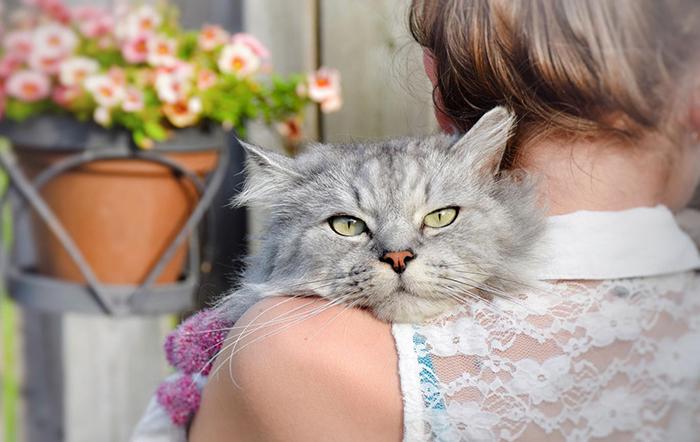 10 серьёзных причин завести кота, о которых стоит задуматься