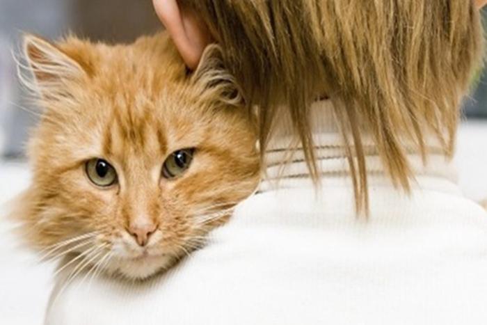 Даже холестерин котам подвластен