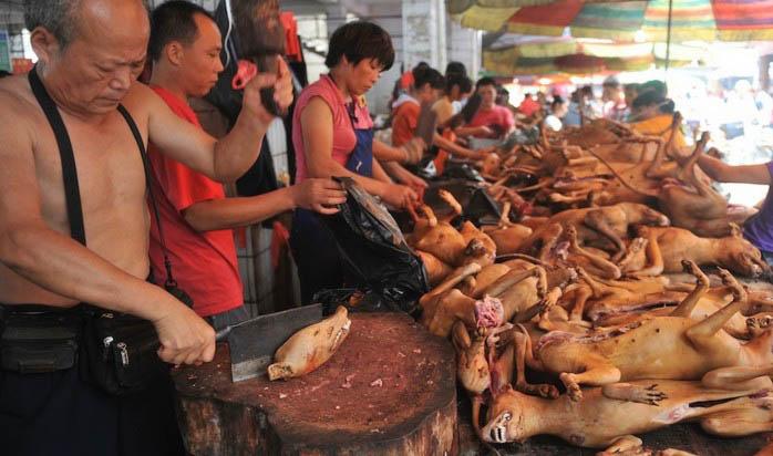 Ежегодный фестиваль собачьего мяса