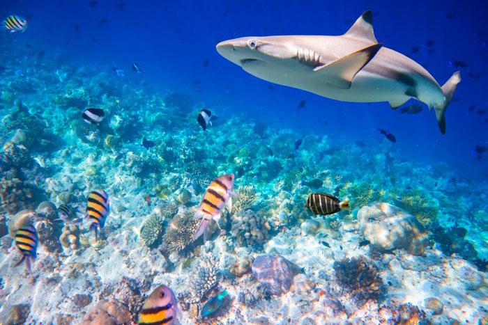 Мальдивы – Индийский океан