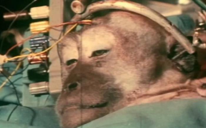 Трансплантация головы обезьяны