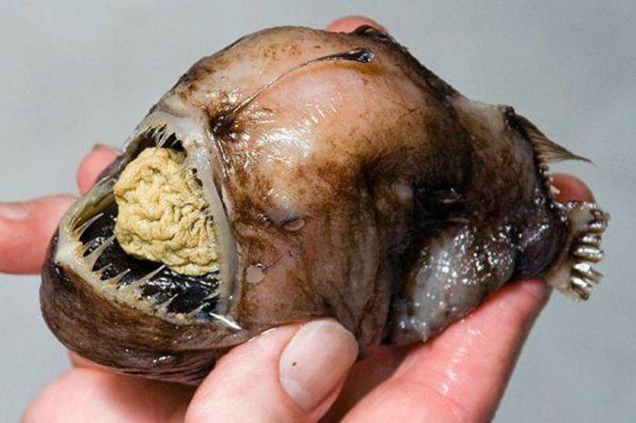 Глубоководный морской черт