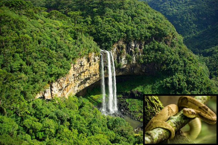 оход на Змеином острове (Кеймада-Гранди), Бразилия