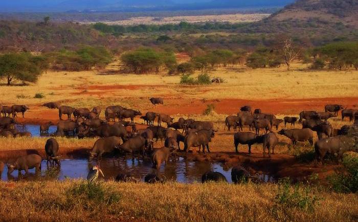Национальный парк Серенгети, Танзания и Кения