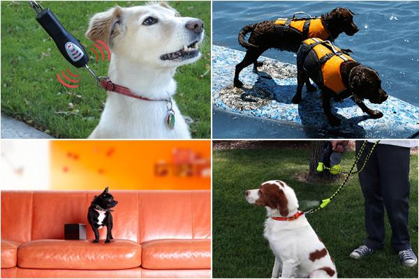 10 самых необходимых аксессуаров для любимой собаки