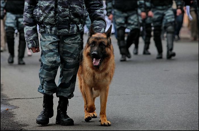 10 самых лучших полицейских пород собак в мире