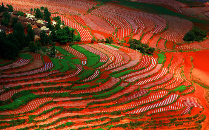 Яркие краски полей