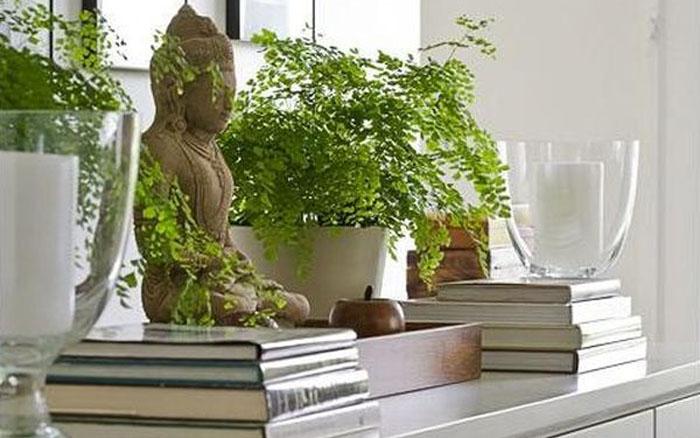 Горшочные растения - элементы стихии Дерево