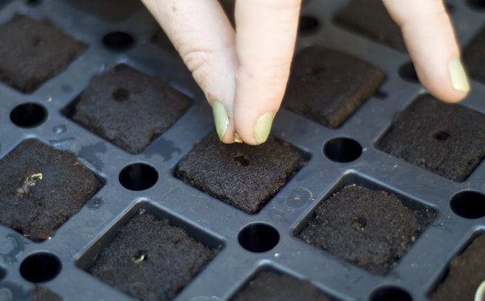 Проращивание семян