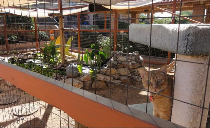 Патио для кота