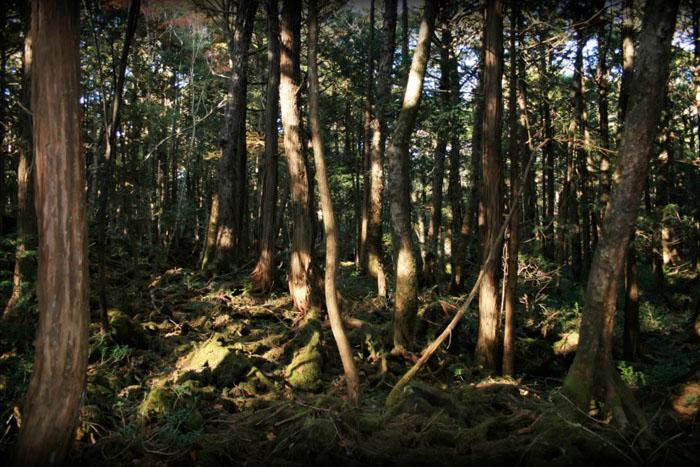 Лес для самоубийц