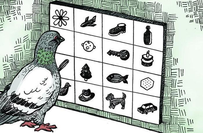 У голубей достаточно долгая память