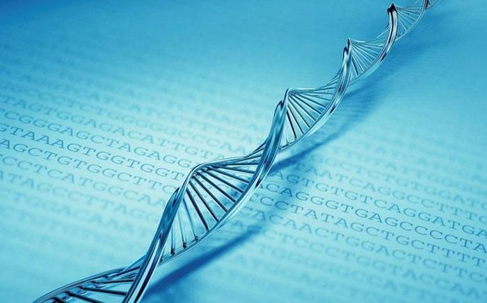 Компьютер ДНК
