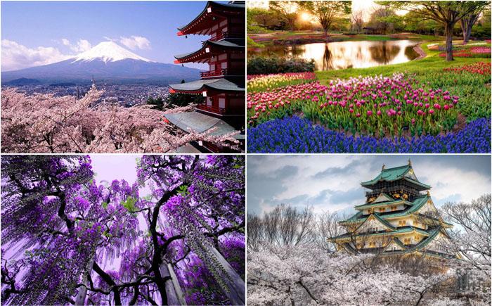 Весна в Японии, которую должен увидеть каждый
