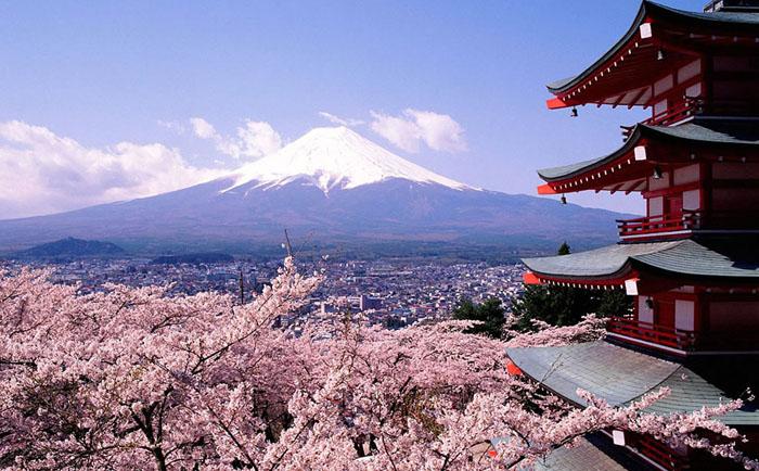 Цветущая сакура на фоне Фудзи