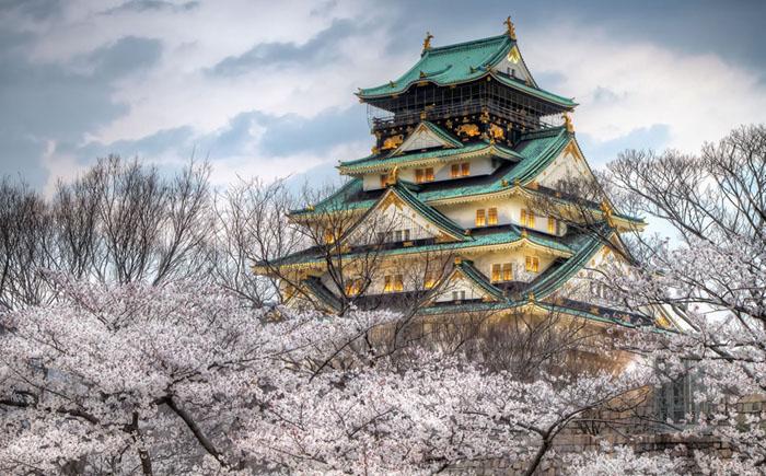 Весеннее цветение вишни парке Замок Осака