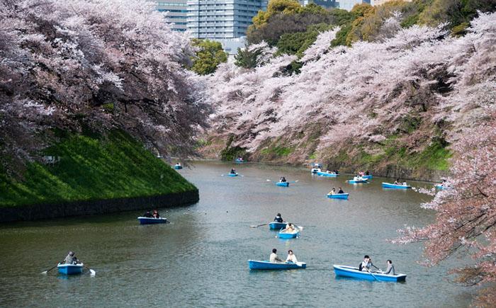 Прогулка на лодке во время цветения сакуры, Токио
