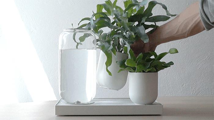 Tableau – подставка для автоматического полива комнатных растений