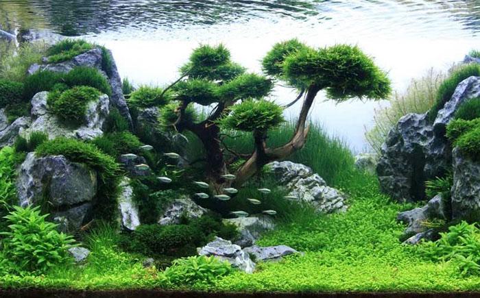 Новый взгляд на аквариумистику