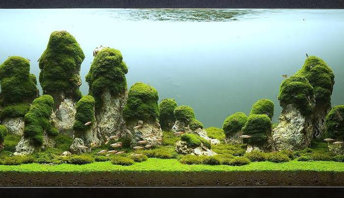 «Столпы земли». Автор – Паскаль Буонпане из Италии. Объём аквариума – 400 литров.